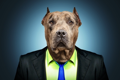 pit boss dog in suit